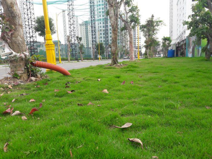 Ảnh thực tế cây xanh, thảm cỏ Chung cư Eco Lake View