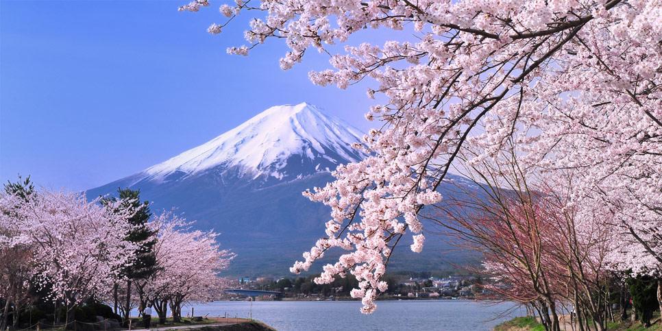 chung cư sakura 1 quốc hoa nhật bản
