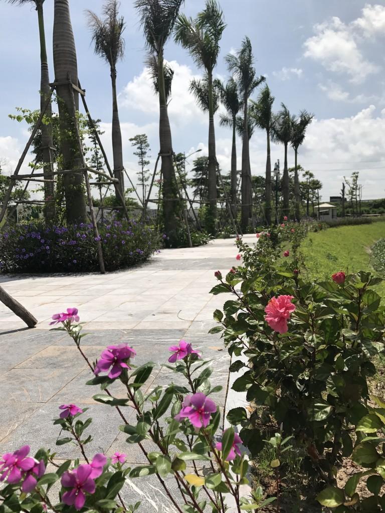 chung cư areca garden hạ tầng 3