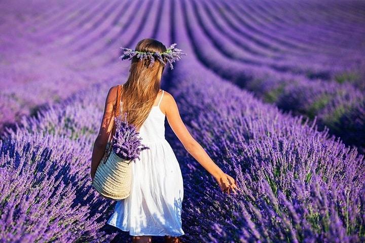Lavender Garden - Vườn Oải Hương tím ngắt 2021